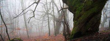 Imagen-del-bosque-del-Baztan-