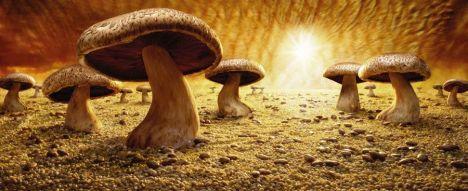Mushroom-Savanna