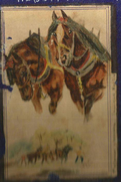 caballos tioma